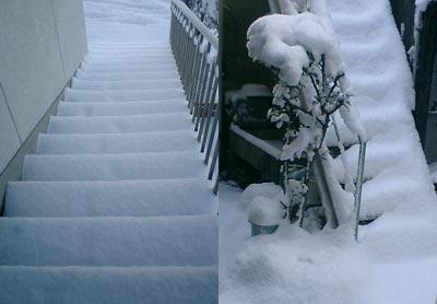 snow200512.jpg