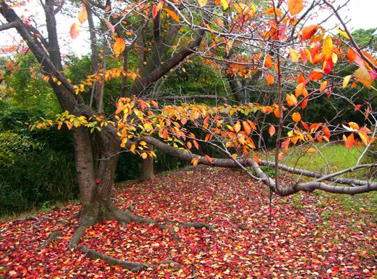 autumn2008-1.jpg