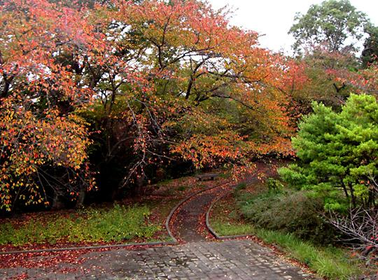 autumn2008-2.jpg