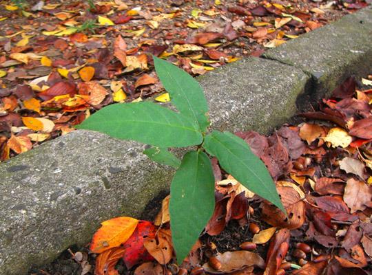 autumn2008-3.jpg