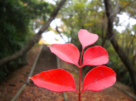 autumn2008-4.jpg