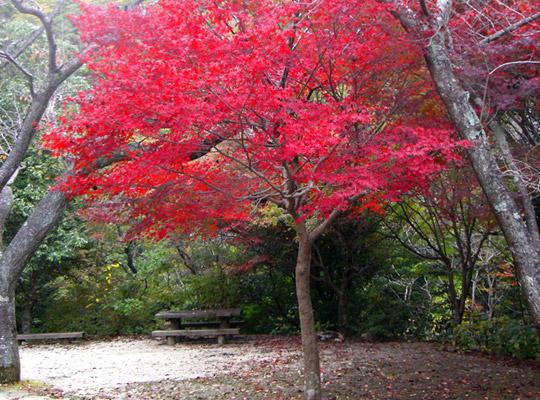 autumn2008-5.jpg