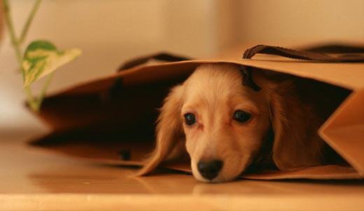 stress_dog.jpg