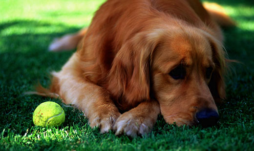 tennis-start.jpg